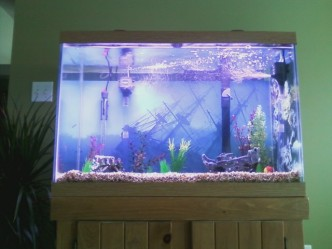 This is what we agreed on. So far only 4 inches of fish in 65 gallons of water. I bet they'd be easier to spot if I gave them a little bling.