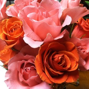 photo credit: Pink and orange roses via photopin (license)
